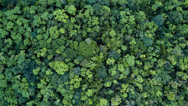 floresta e árvore paisagem de fundo de textura, floresta vista aérea superior, textura da floresta vista de cima. - alto descrição geral - fotografias e filmes do acervo