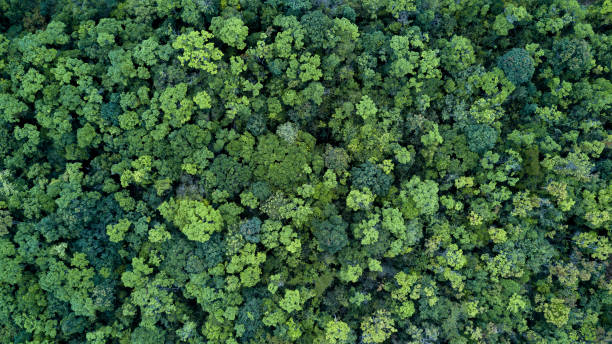 forest and tree landscape texture background, aerial top view forest, texture of forest view from above. - mata imagens e fotografias de stock