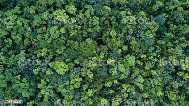 Photo of Forest and tree landscape texture background, Aerial top view forest, Texture of forest view from above.