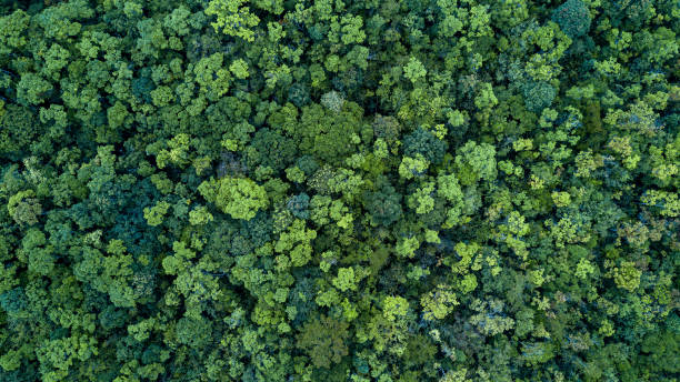 Forest and tree landscape texture background, Aerial top view forest, Texture of forest view from above. stock photo