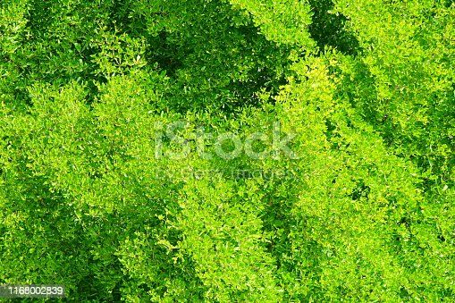 Forest, Evergreen Tree, Plant, Season, Summer