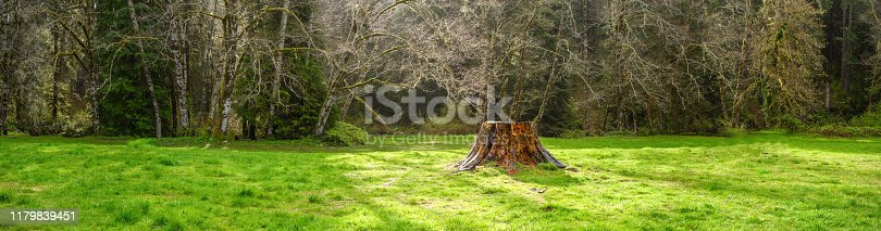 Tree trunk with forest in spring