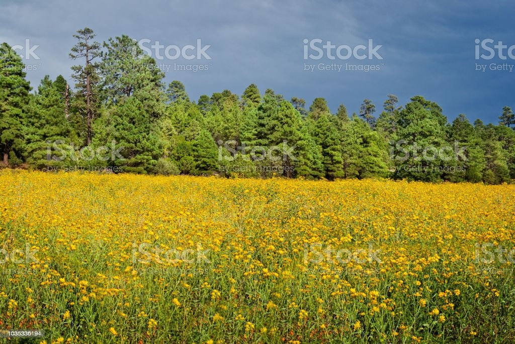 Forest and Wildflowers stock photo