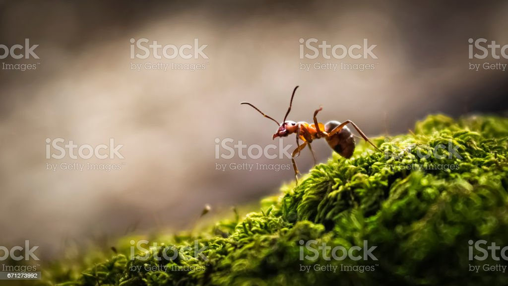 Forest ant closeup stock photo