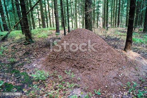 Die typischen Hügel der Waldameisen in der Fischbeker Heide