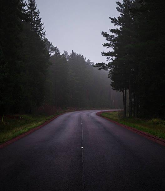 forest asphaltstraße in einem wolkigen wetter - dunkle flecken entferner stock-fotos und bilder