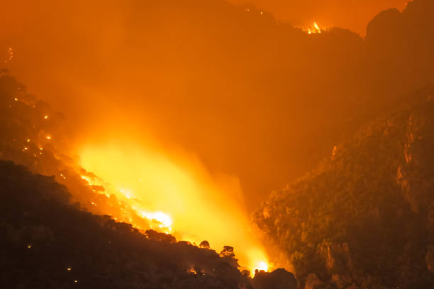 Forest at a mountain under fire. Close up look. stock photo