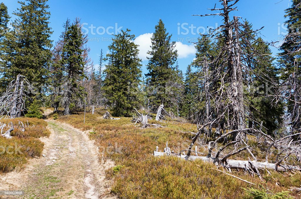 Forest at Great Fatra range, Slovakia stock photo