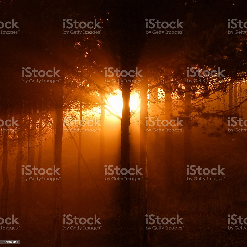 Forest at night royalty-free stock photo