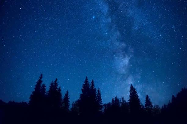 Wald bei Nacht – Foto