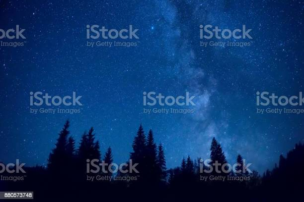 Photo of Forest at night