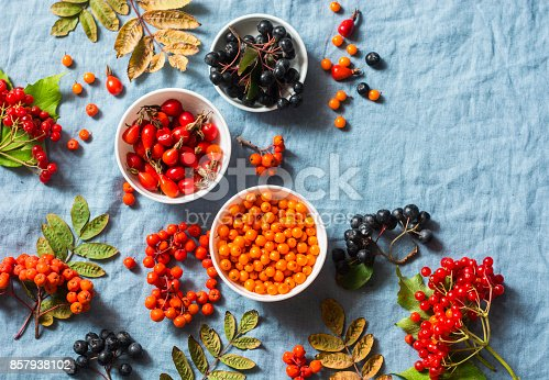istock Forest autumn berries - sea buckthorn, ashbery, viburnum, rose hips on a gray background, top view. Super food ingredients vegetarian healthy concept 857938102
