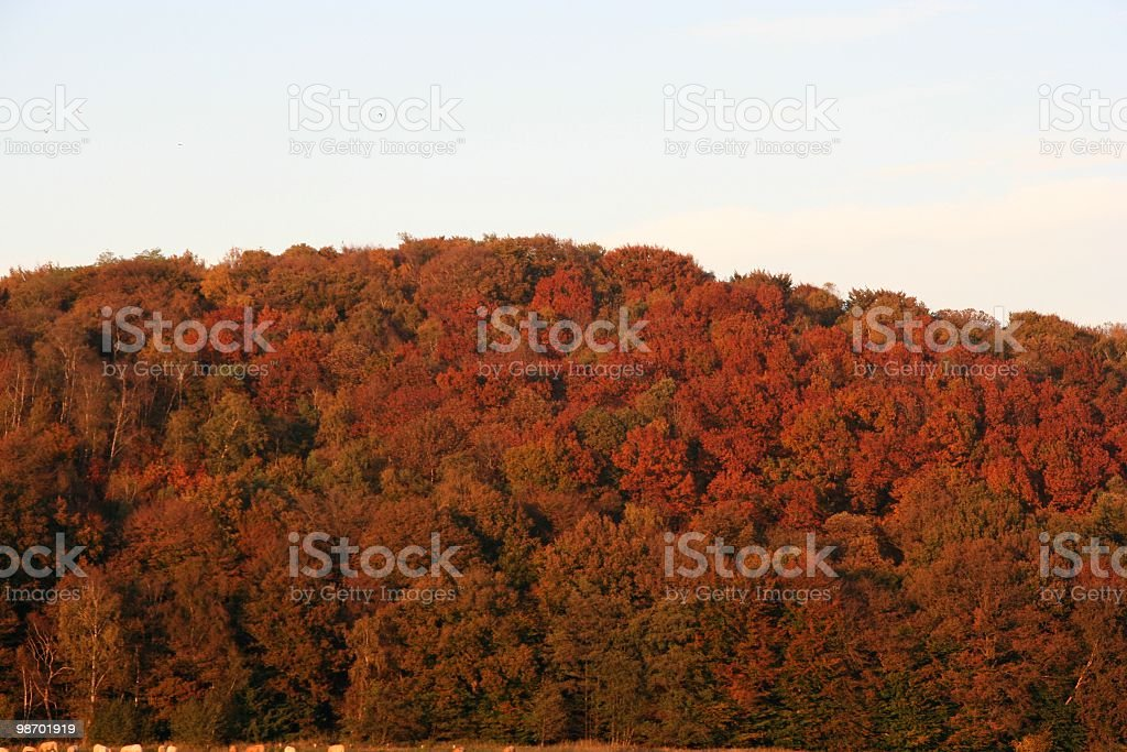 Forest Autumn Fire royalty-free stock photo