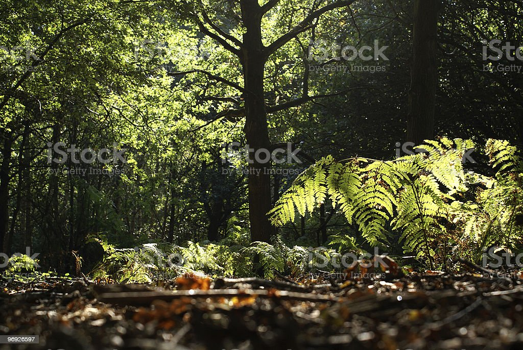 Forest autumn royalty-free stock photo