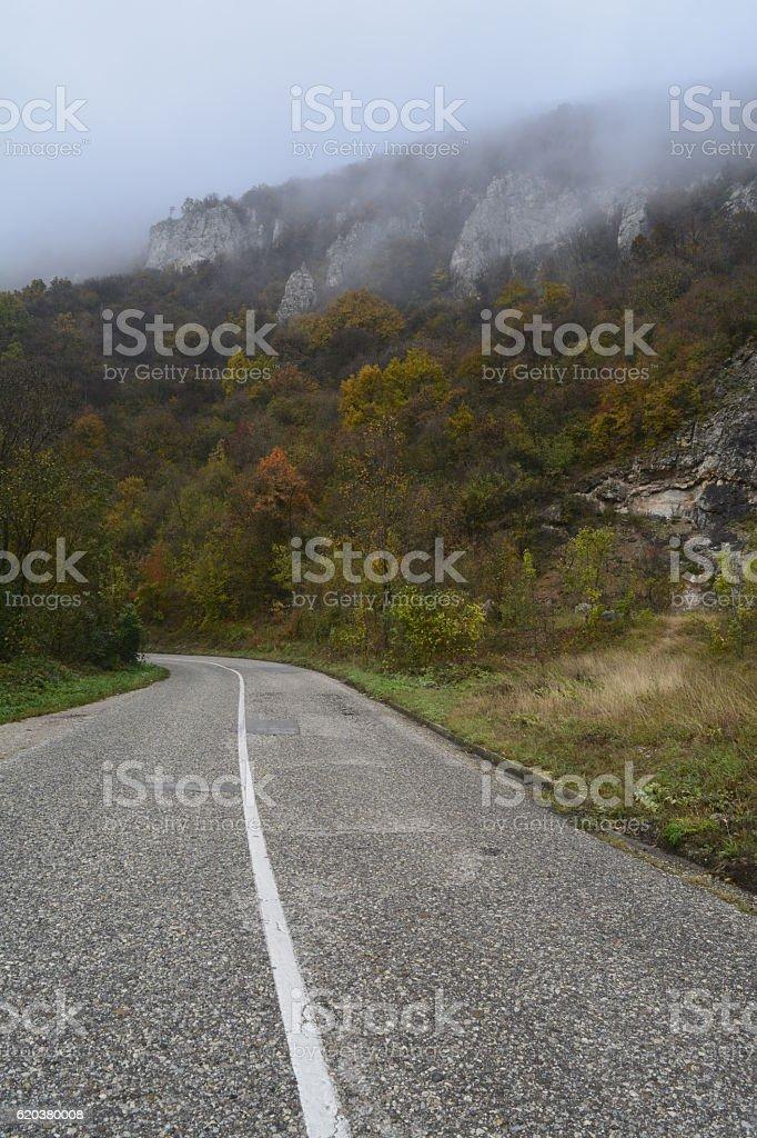 forest autumn, road foto de stock royalty-free
