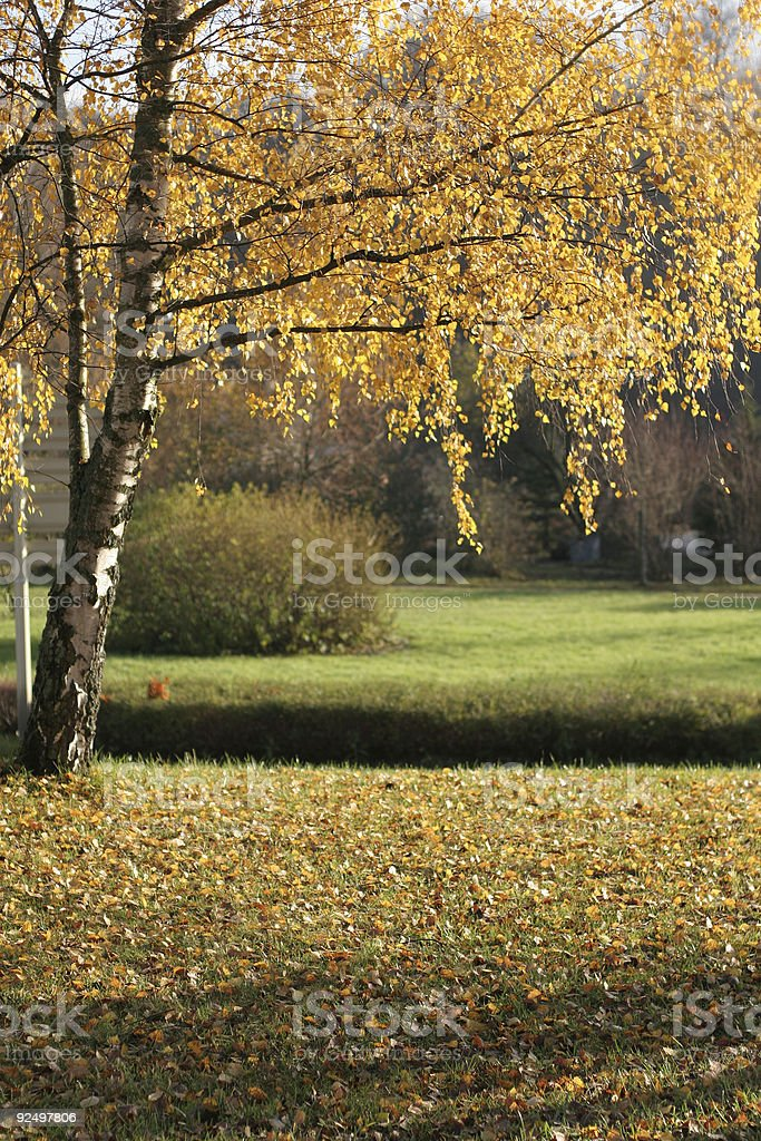 forest autumn sceneries royalty-free stock photo