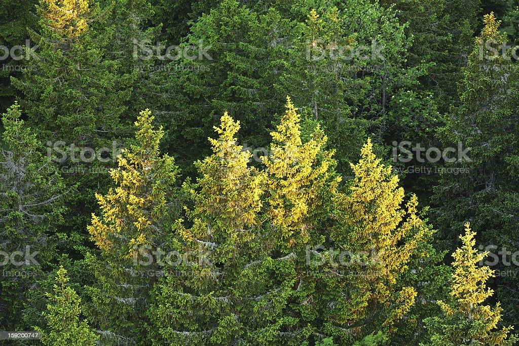Forest Awakening royalty-free stock photo