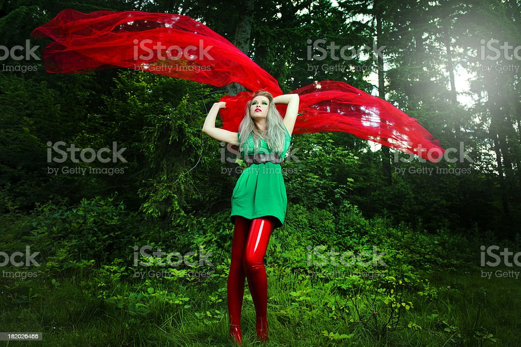 forest beauty stock photo