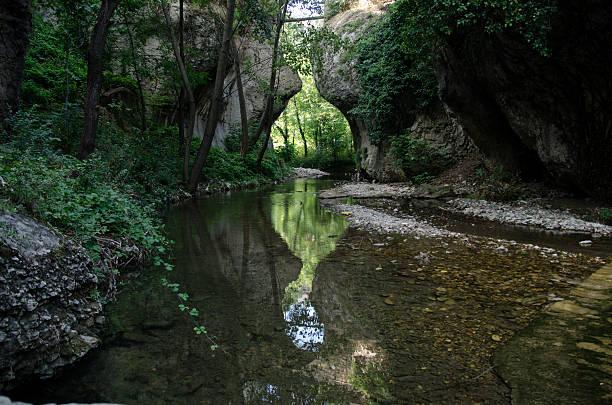 wald hinter der wand - nationalpark müritz stock-fotos und bilder