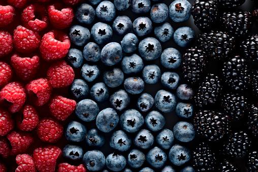istock Forest berries 502634476