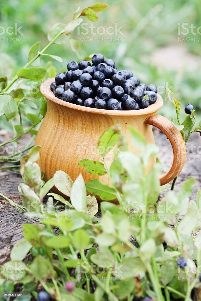 Forest blueberries in a bowl royalty-free stock photo