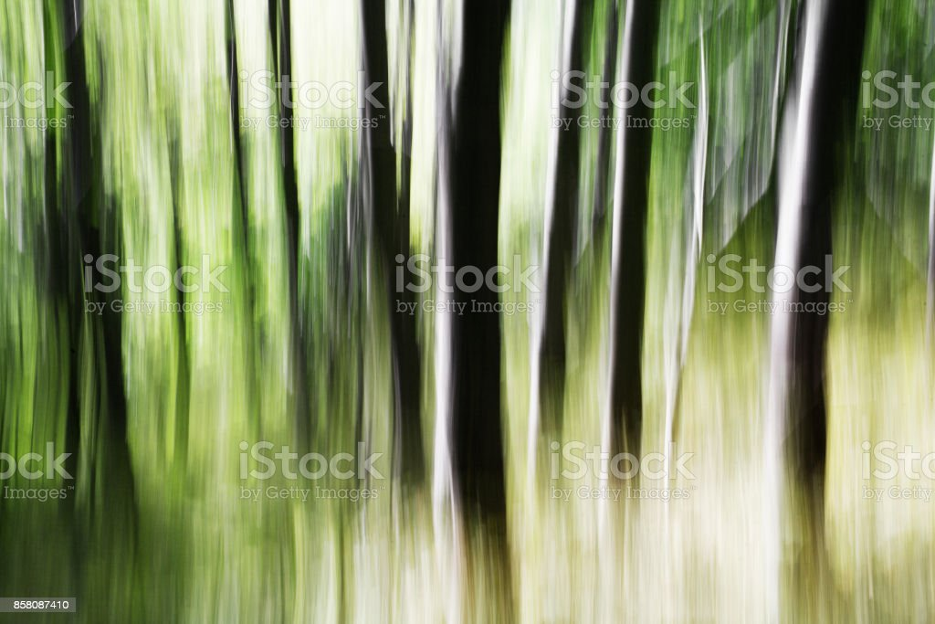 Forest. Blurred motion background stock photo