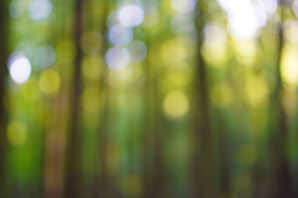 forest bokeh - soft focus stock photos and pictures