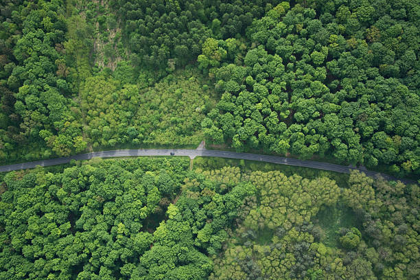 Forest, Brandenburger, Deutschland – Foto