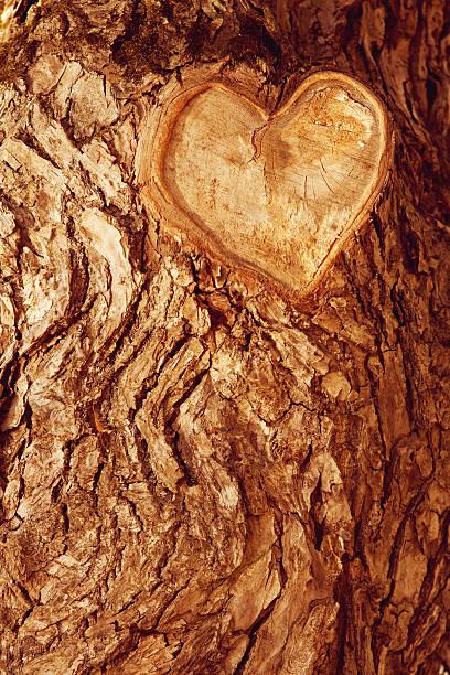 임산 브라운 압살했다 배경. 애니메이션 임산 압살했다 나무 나무껍질 스톡 사진