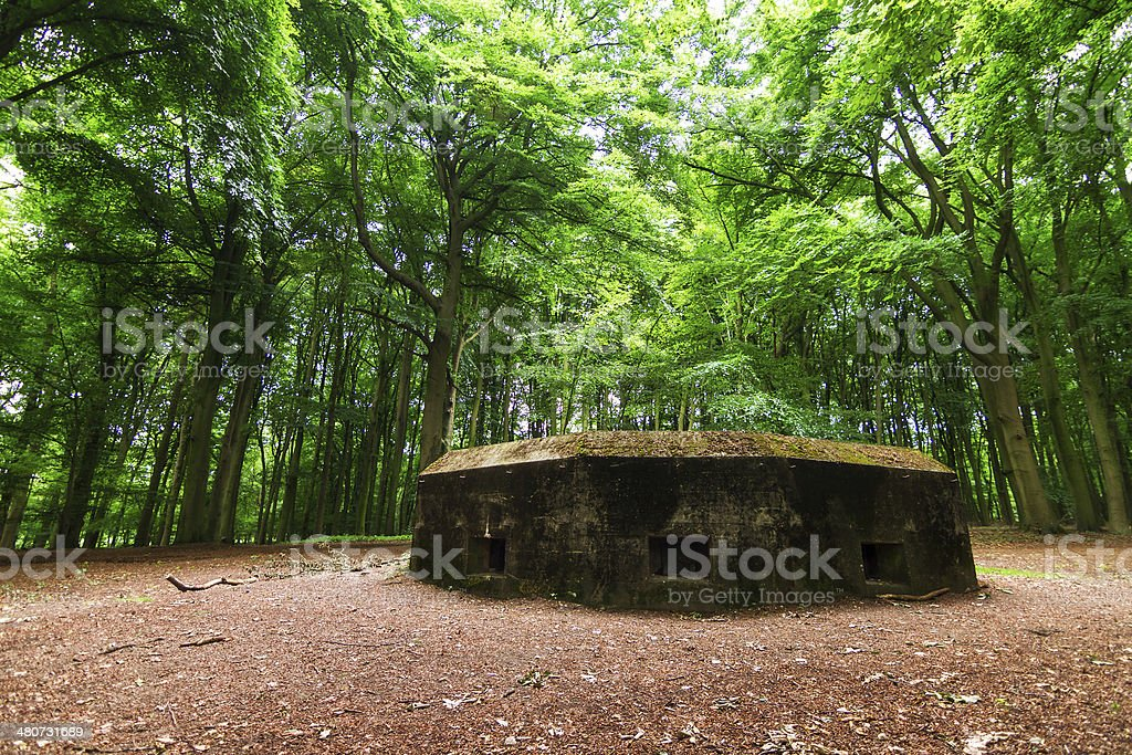 Forest bunker stock photo