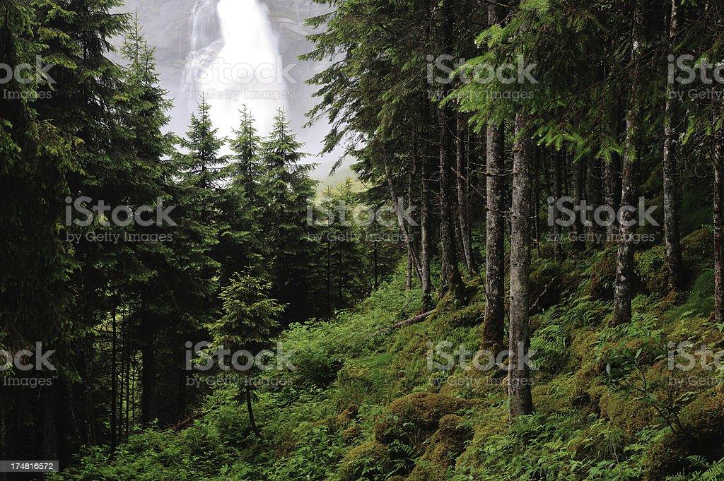 Forest by Krimmler Wasserfälle stock photo