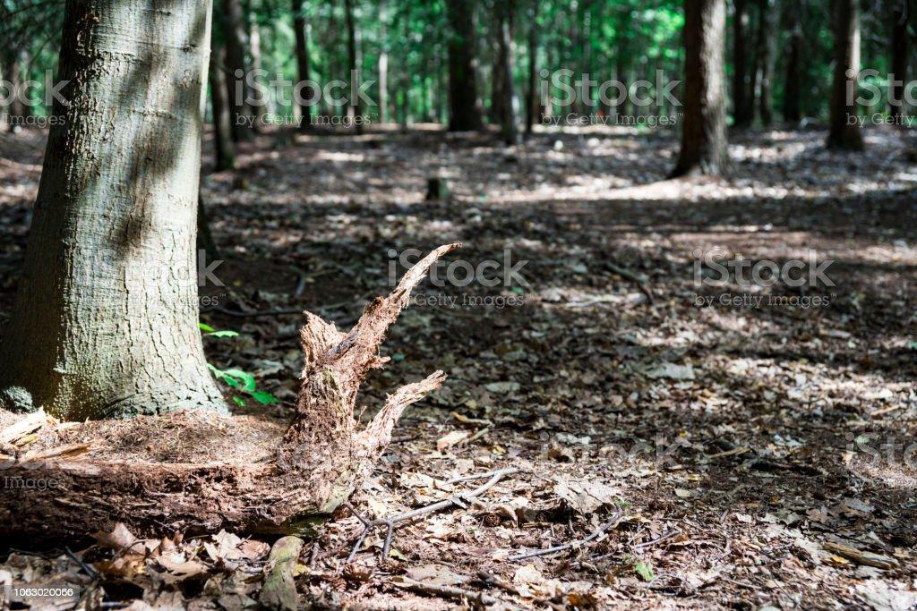 bos genaamd Chaamse Bossen, Nederland foto