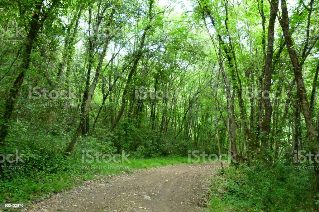 Appel de la forêt - Photo de Arbre libre de droits