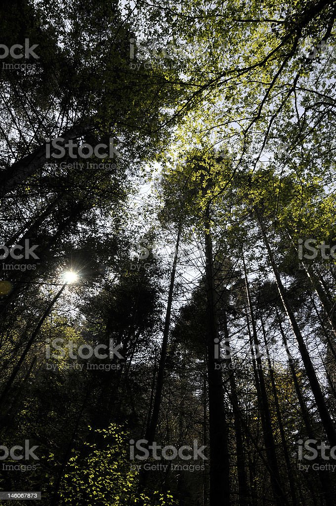 Forest Canape royalty-free stock photo