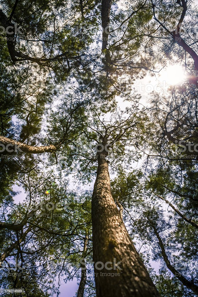 Forest Canopy and Sunshine in Florida royalty-free stock photo