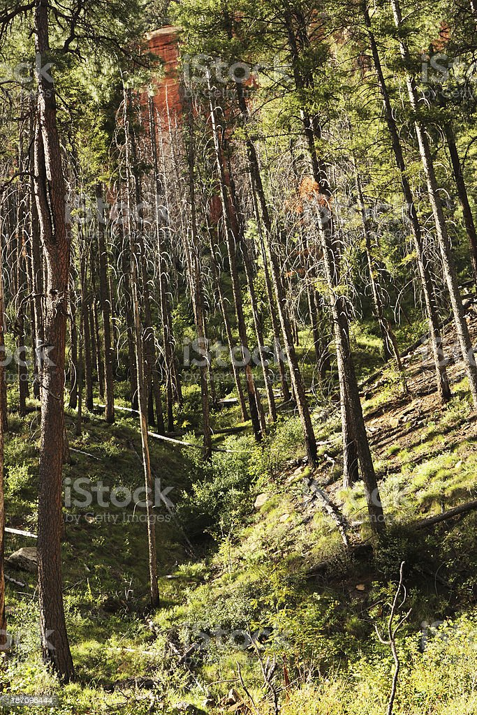 Forest Canyon Wilderness Landscape royalty-free stock photo