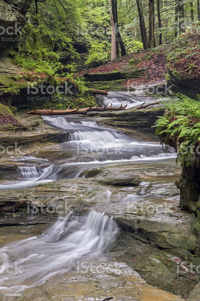 Forest Cascade stock photo