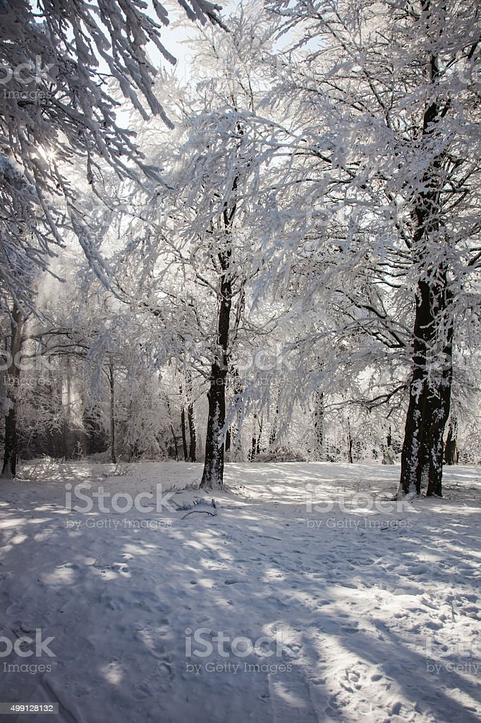 Forest clearing, covered with snow stock photo