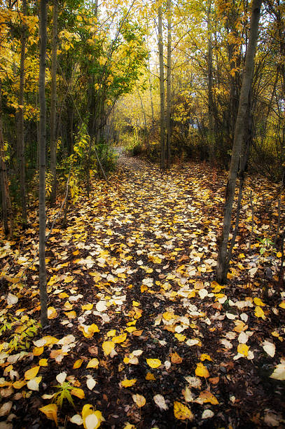Forest Clearing in Autumn stock photo