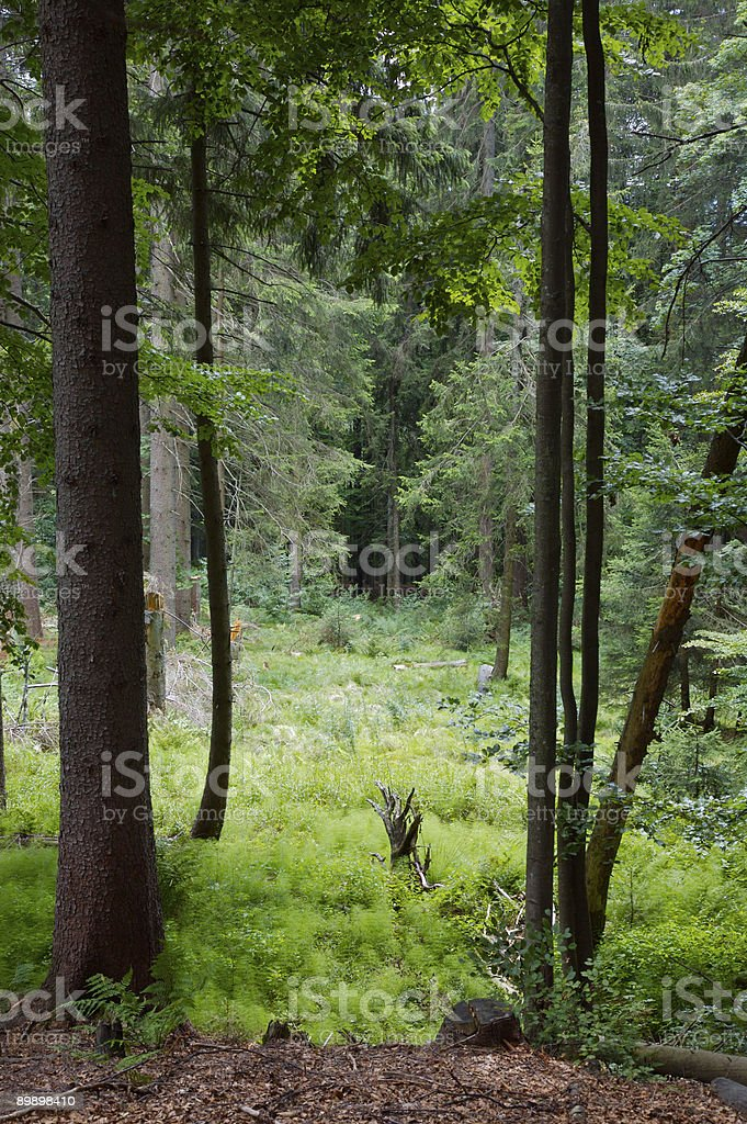 Forest clearing royalty-free stock photo