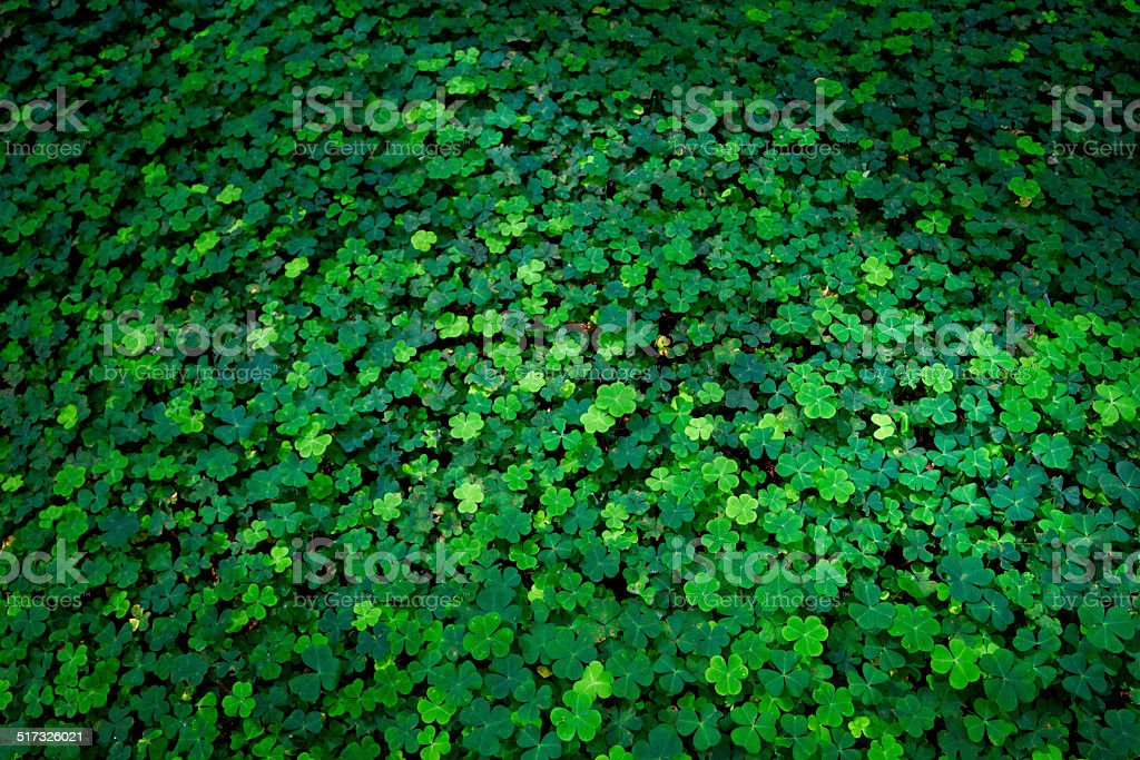 Forest Clover Background stock photo