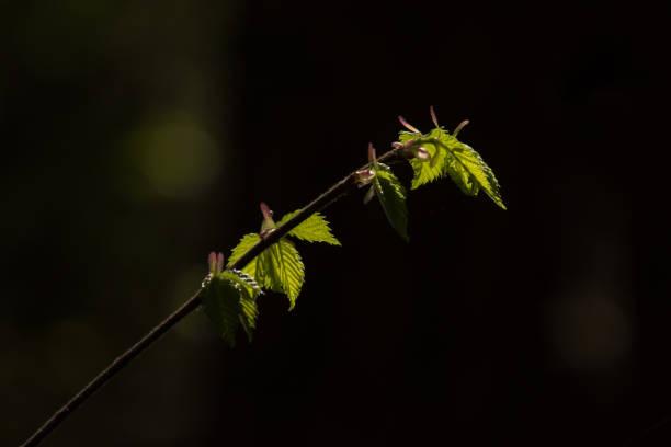 Las budzi się do życia – zdjęcie