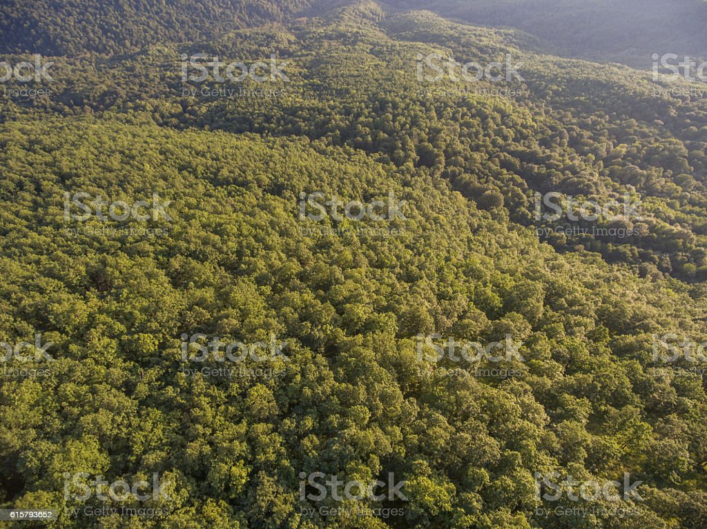 Forest cover on the hill. View from above. stock photo