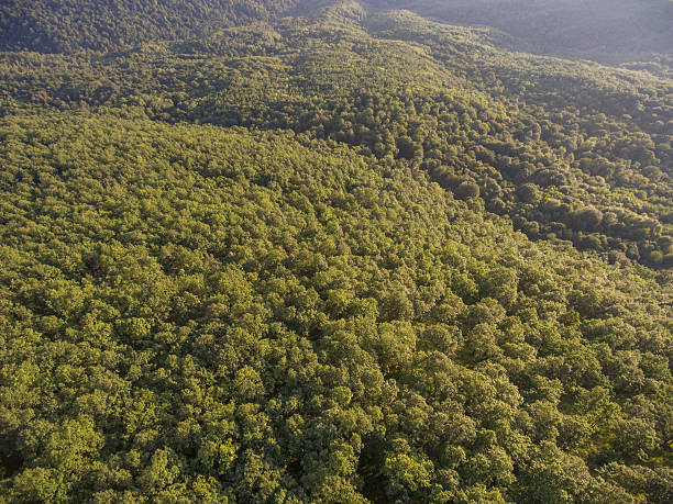 Forest cover on the hill. View from above. - foto de acervo