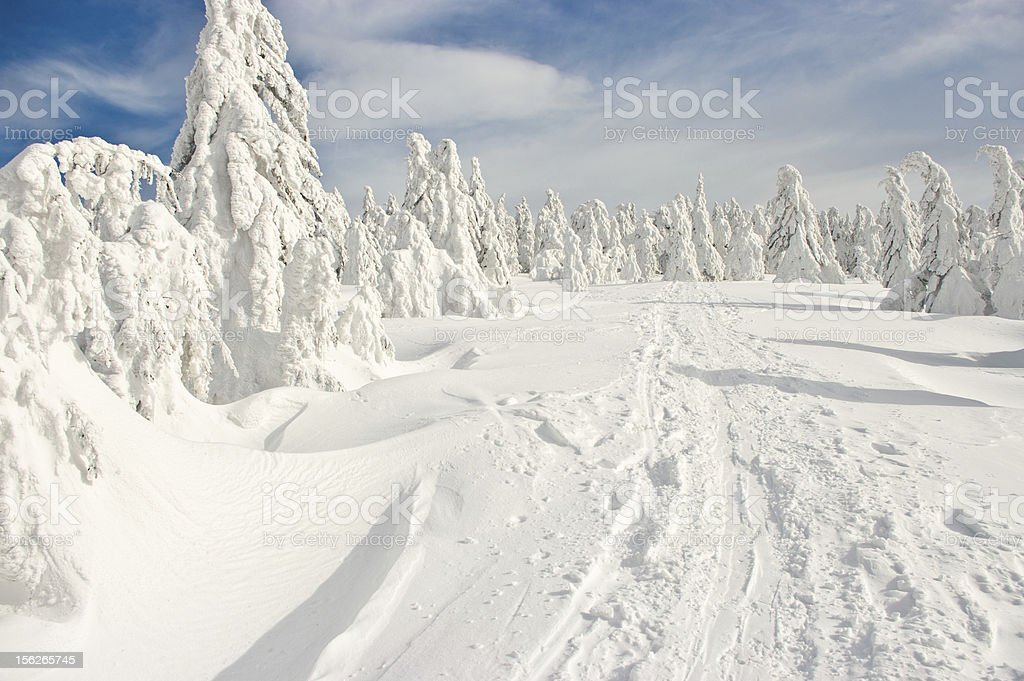 Forest covered by snow stock photo