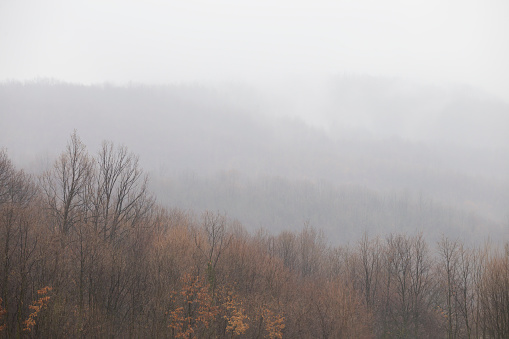 Forest covered with low altitude clouds and fog