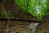 A forest creek in a ravine in a summer day