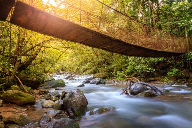 Forest creek in Rincon de la Vieja National Park in Costa Rica stock photo