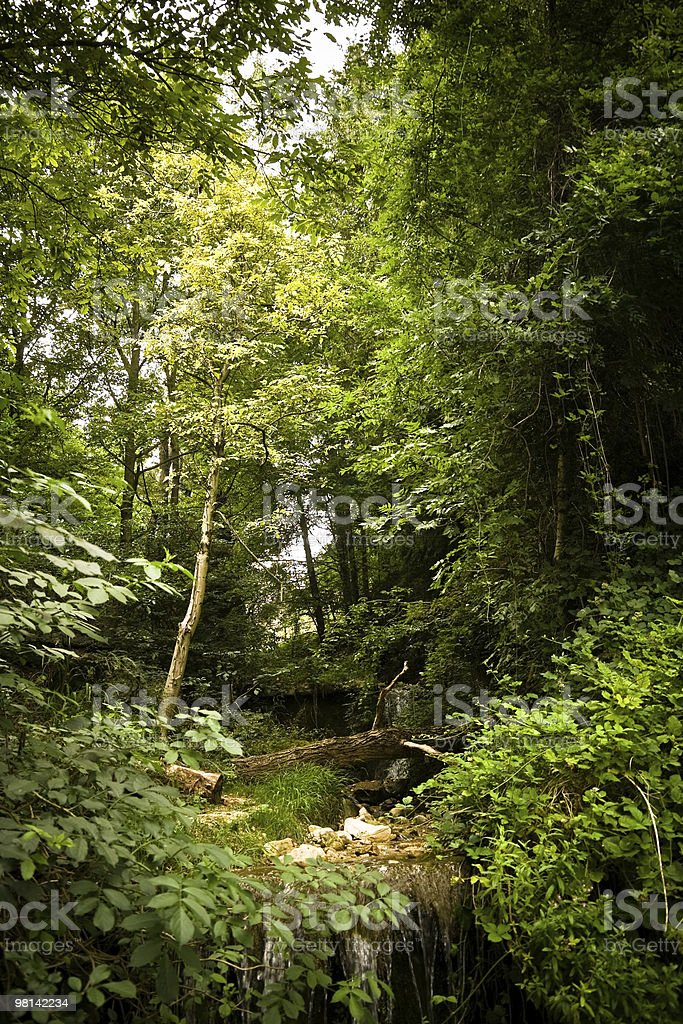 Forest creek royalty-free stock photo