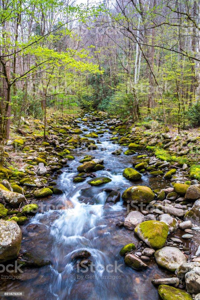 Forest Creek. Wasser stürzt über Felsen im Great Smoky Mountains National Park. – Foto
